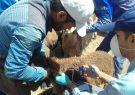 ورود دام عشایری به مراتع پناهگاه حیات وحش حیدری بدون گواهی واکسیناسیون و پروانه چرا ممنوع است