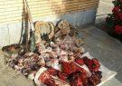 دستگیری شکارچی غیر مجاز قوچ وحشی توسط محیط بانان
