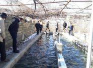 نیشابور یکی از سه شهرستان برتر خراسان رضوی در حوزه آبزی پروری