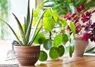 دانستنیهای جالب درباره گیاهان